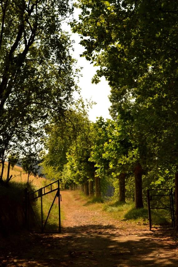 walking through the beautiful hills of Loyola